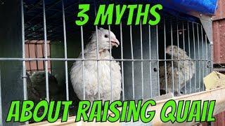 3 Myths About Raising Quail