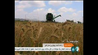 Iran Mechanized Wheat harvest, Sarbaz county برداشت مكانيزه گندم شهرستان سرباز ايران