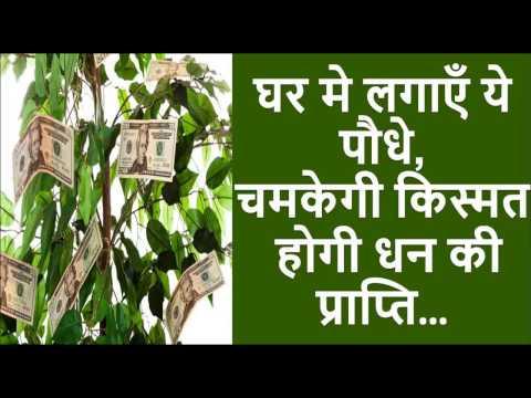 वास्तु टिप्स - जल्दी अमीर बनना चाहते हैं तो घर मे लगाएँ ये पौधे| Vastu tips to become rich