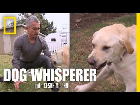 Xxx Mp4 Showdown With Holly Dog Whisperer 3gp Sex