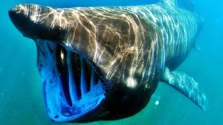 Dünyanın En Büyük Ağızlı 10 Hayvanı