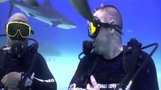 Shark Adventure - 5 (The Feed)