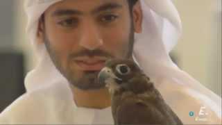 Halcones en Abu Dhabi