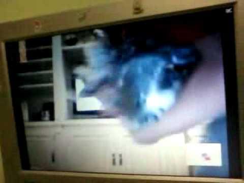 Lucas Ramos comendo a cachorra por falta de mulher.
