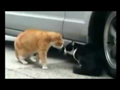 10 minutos de videos con gatos lindos tiernos y graciosos