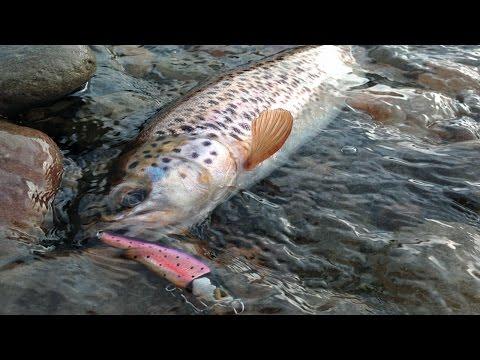 горная рыбалка в карпатах