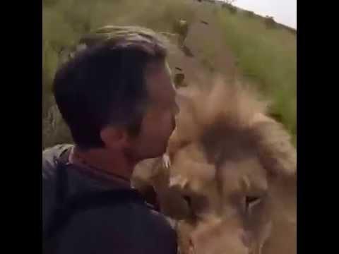 lion love, animal love