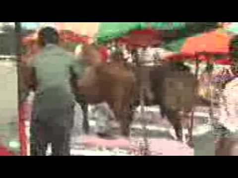 Xxx Mp4 Horse Action 3gp 3gp Sex