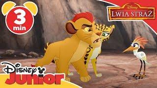 Lwia Straż - Kion chroni zebry