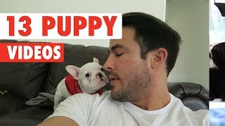 13 Funny Puppies | Funny Dog Video Compilation 2017