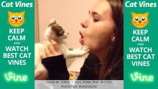 Ultimate Cat Vines Compilation #5 - October 2015