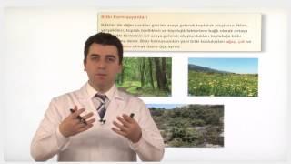 10. Sınıf COĞRAFYA - Dünya'yı Kaplayan Örtü Bitkiler