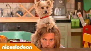 Nicky Ricky Dicky & Dawn | Come Nascondere Una Celebrità | Nickelodeon Italia