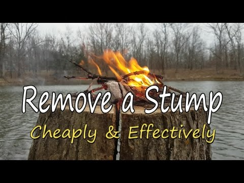 Xxx Mp4 How To Remove A Stump Cheaply Amp Effectively 3gp Sex