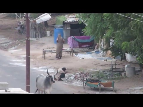 Early Morning Scene In Punjab Village, INDIA ●●MUST WATCH●●