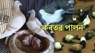 কবুতর পালন করে মাসে আয় ২৫ হাজার টাকা | pigeon farming in bangladesh