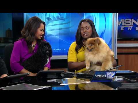 WISN 12 News This Morning pets visit the set