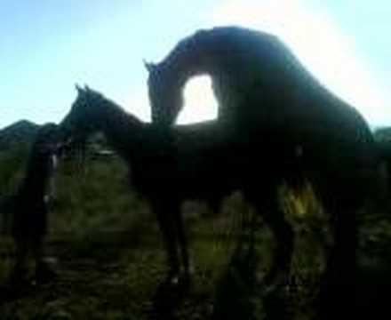 Xxx Mp4 Horse Fucks A Mare 3gp Sex