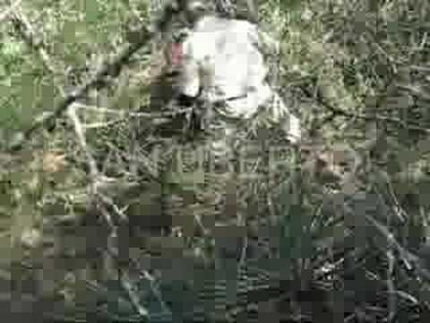 Puma Hunt