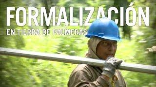 Contratación directa abre nuevos horizontes en el sector palmero de Colombia