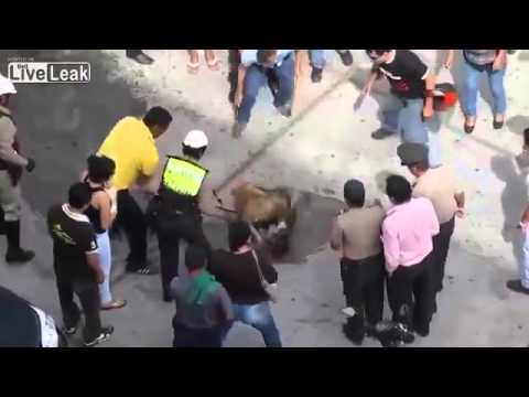Street dogs fighting in Peru