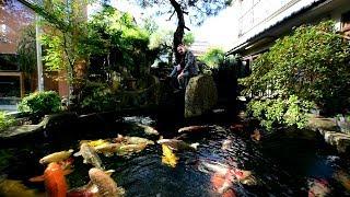 Modern Koi Blog #2015 - Dies und das zum Filmen und Fotografieren