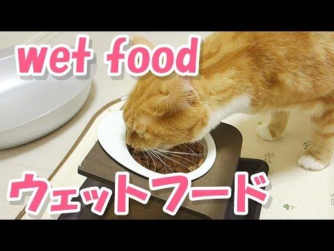funny cat only licking wet cat food / 猫がウェットフードを舐め続けている【猫 おもしろ】
