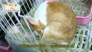母愛 - 母兔生產記錄  愛兔協會