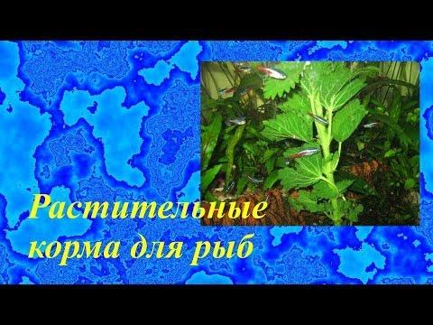 Растительный корм для аквариумных рыбок своими руками