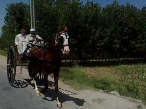 Xxx Mp4 Horse Of Muhammad Shafeeq Ameeni Qadri 3gp 3gp Sex
