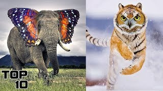 Top 10 Animals Created By Science