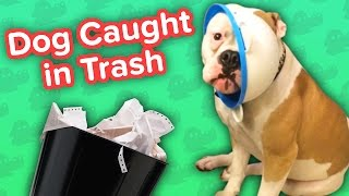 Dog Caught in Trash & Hungry Giraffes! // Funny Animal Compilation
