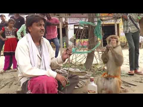 Sapna Chaudhary Ki Tarah Dance Karti Hai Ye Bandariya  Comedy Video From My Phone mp4