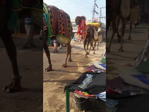 Xxx Mp4 Xxx Camel 3gp Sex