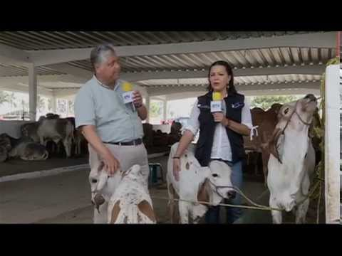 Veracruz Agropecuario Expo Ganadera Ylang Ylang 2014 TVMÁS