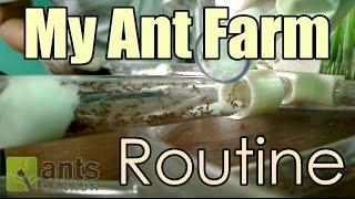 Time Lapse - My Ant Farm Routine