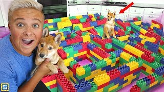 THE WORLD'S BIGGEST HIDE AND SEEK PUPPY MAZE!