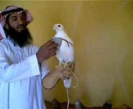 طير نادر الوجود