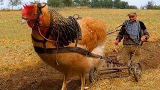 दुनिया के 5 सबसे बड़े पक्षी।। Biggest birds in the world ! in Hindi
