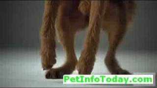 Dog's jumping for Pedigree Dog Food with music and slow motion