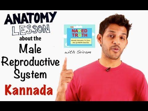 Male Reproductive Anatomy Lesson - Kannada