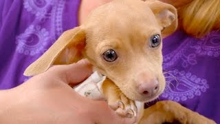Going Above and Beyond to Save a Sweet Puppy's Life