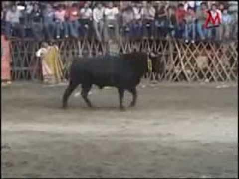 Algunos de los mejores toros de yucatan 2008 20013