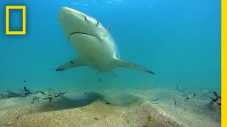 Why Fewer Blacktip Sharks Are Migrating to Florida   National Geographic