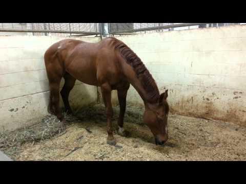 Xxx Mp4 Horse Tries Sleeping Standing Up 3gp Sex