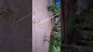 Jamal  shaikh  house  video