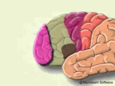 الاعجاز العلمي في القران هل سمعتم عن مركز الكذب في المخ سبحان الله