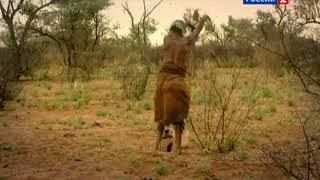 bushmen song mopane\ бушменская песня мопанье