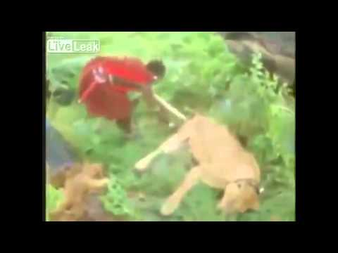 A lion attacked africans hunter