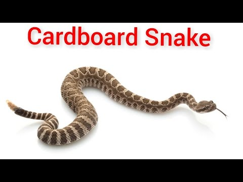 Xxx Mp4 DIY How To Make A Rattle Snake From Cardboard Kids Toy Cardboard Art ANd Craft Project Idea 3gp Sex